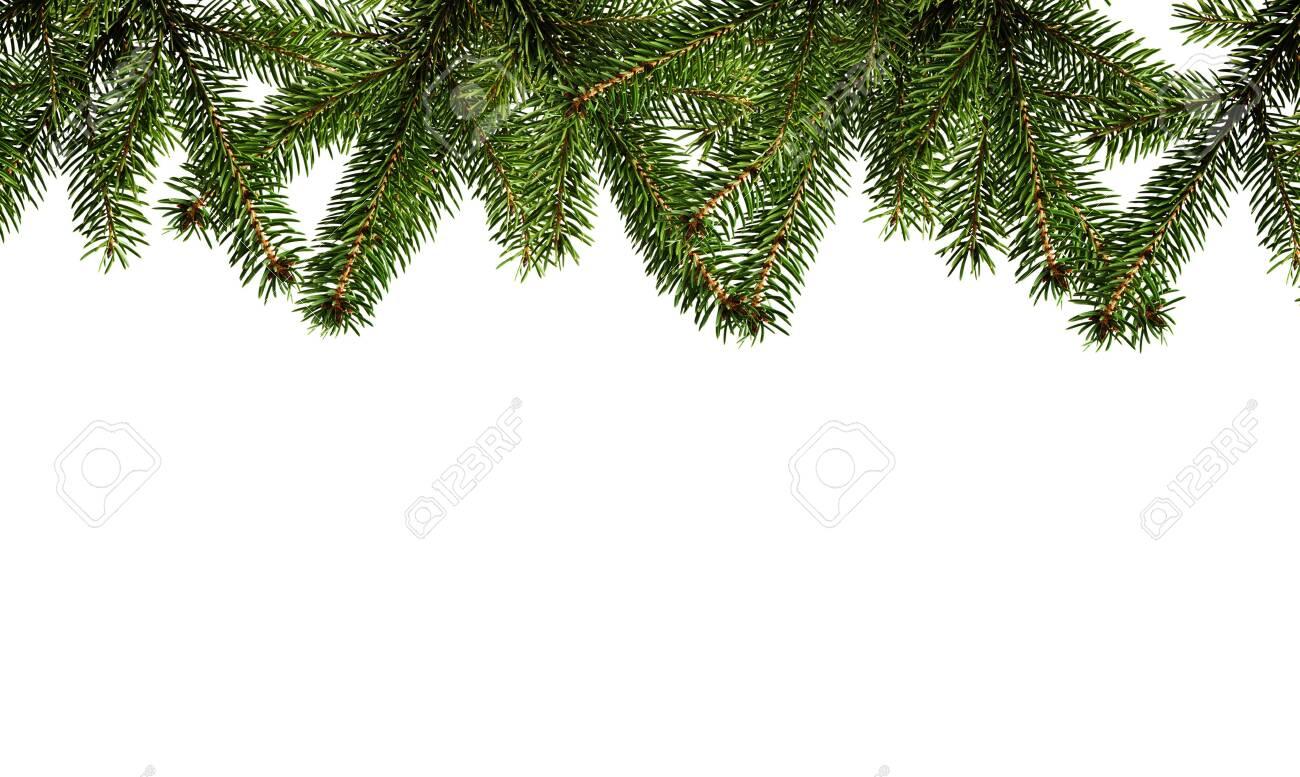 Evergreen Christmas fir branch - 133493840