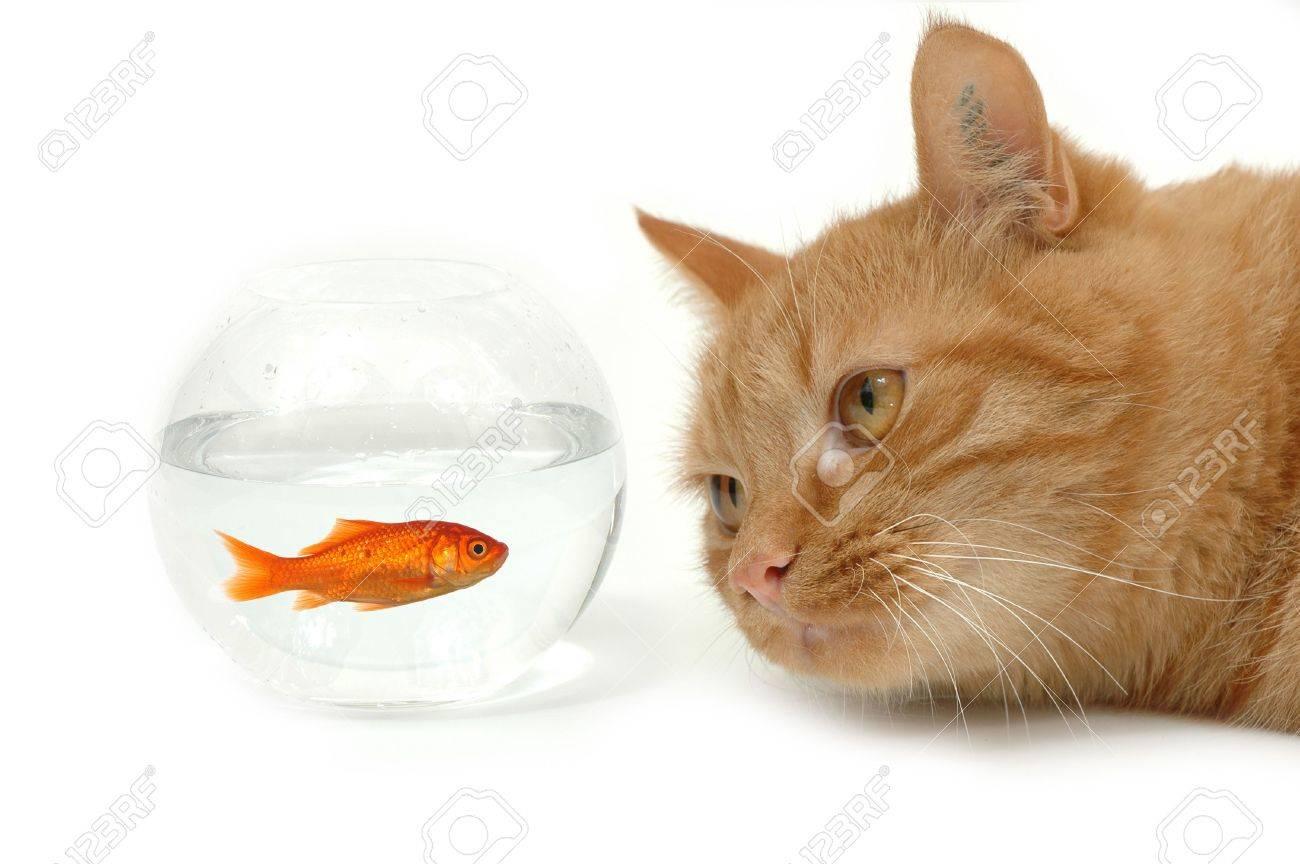 Immagini Stock Il Gatto Lokking Ad Un Pesce In Una Ciotola Noti I