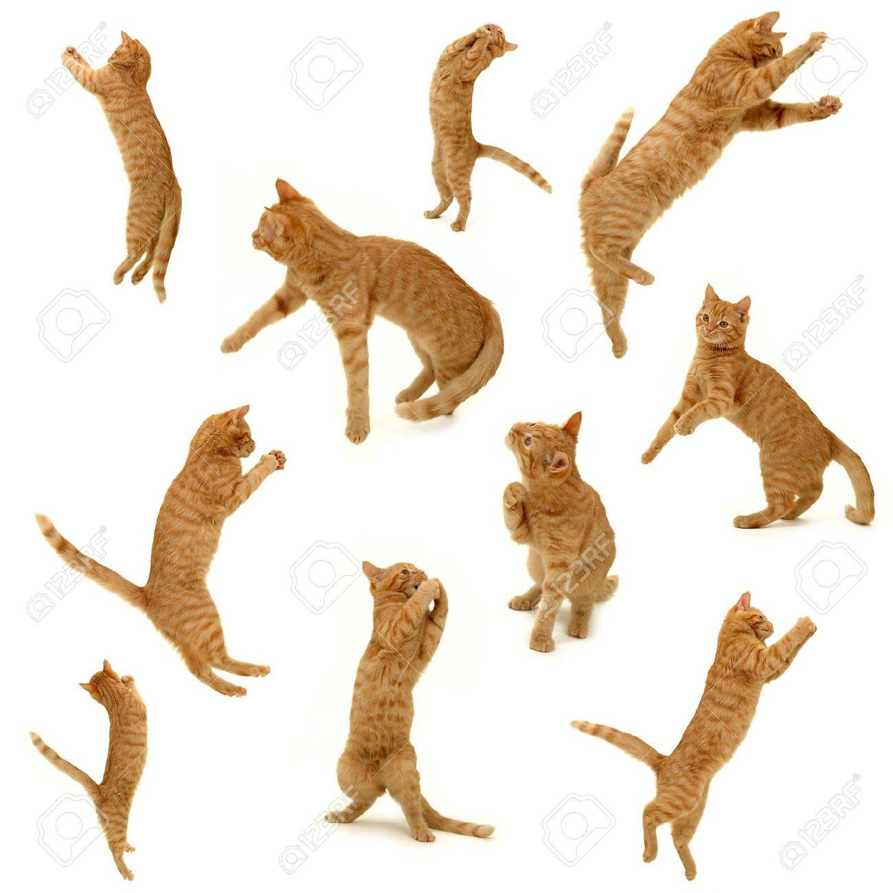 collection of kittens in action. On white background. 3500 x 3500 pixels. Stock Photo - 918604