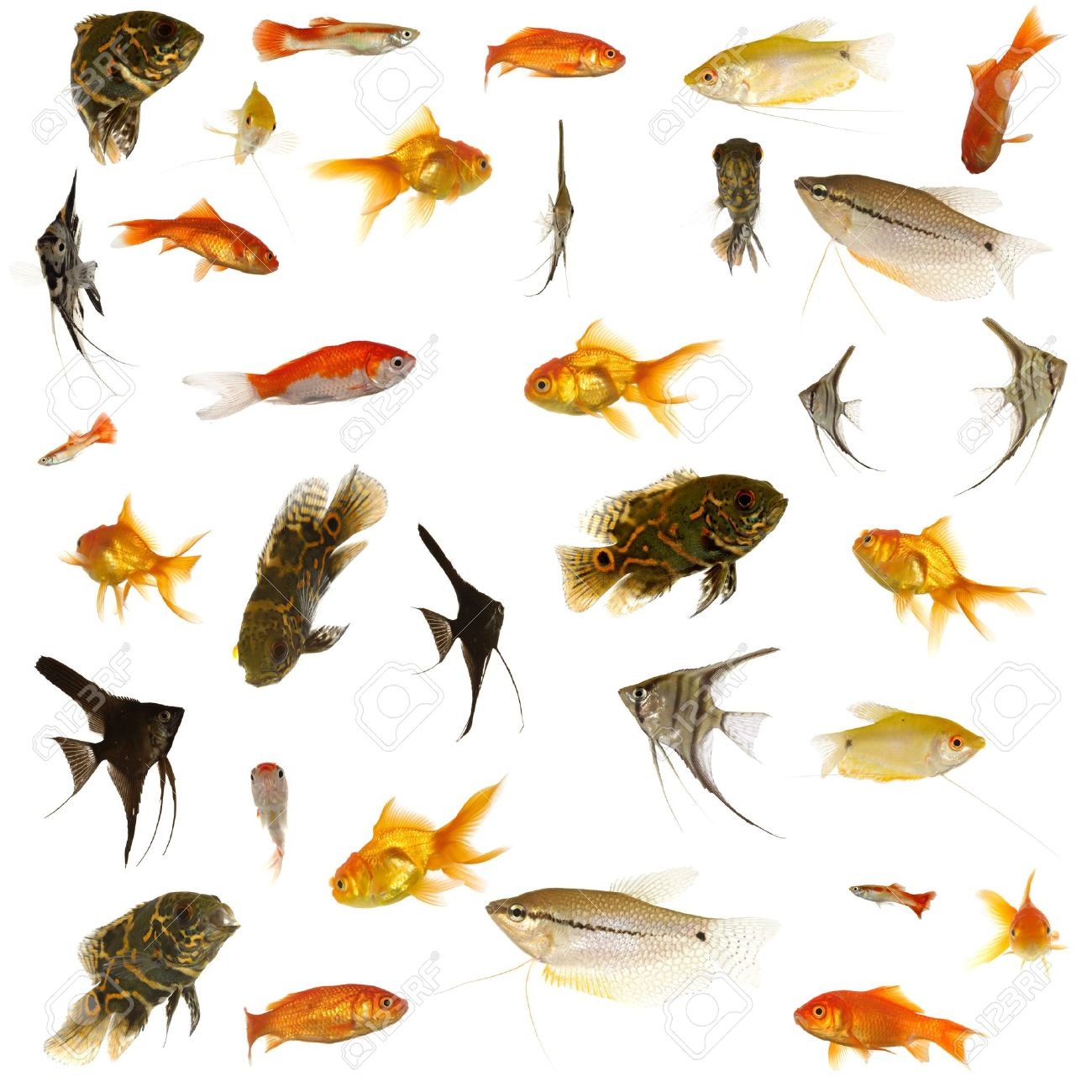Fish collection with many different tropical fish. Stock Photo - 2486645