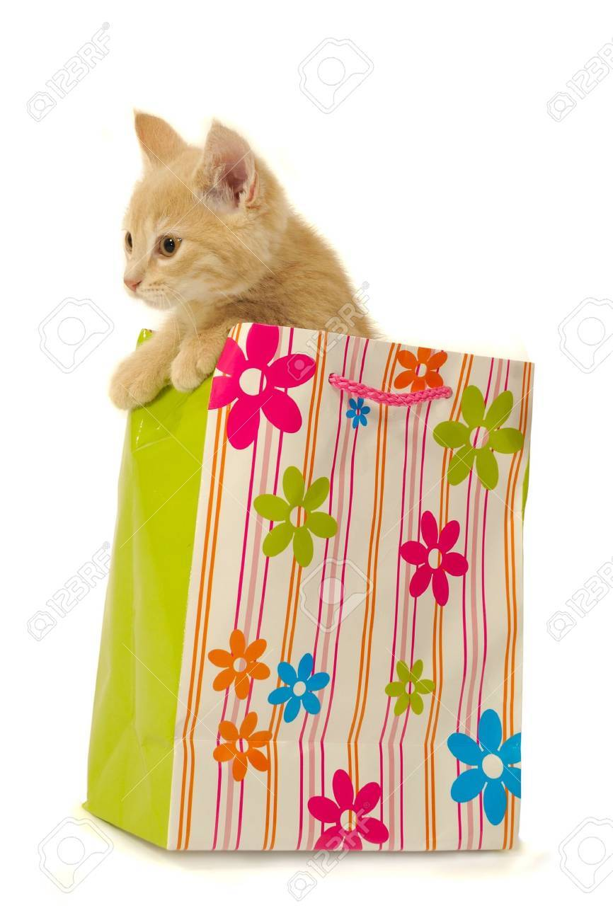 Sweet kitten is sitting in a shopping bag. Stock Photo - 2570820