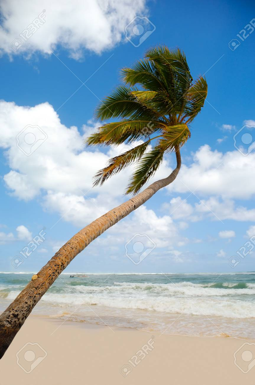 Palm hanging over exotic caribbean beach with the coast in the background. Stock Photo - 6769828
