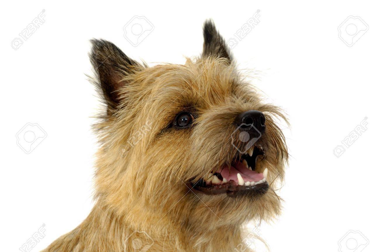 Happy Dog Face Face of Sweet Happy Dog