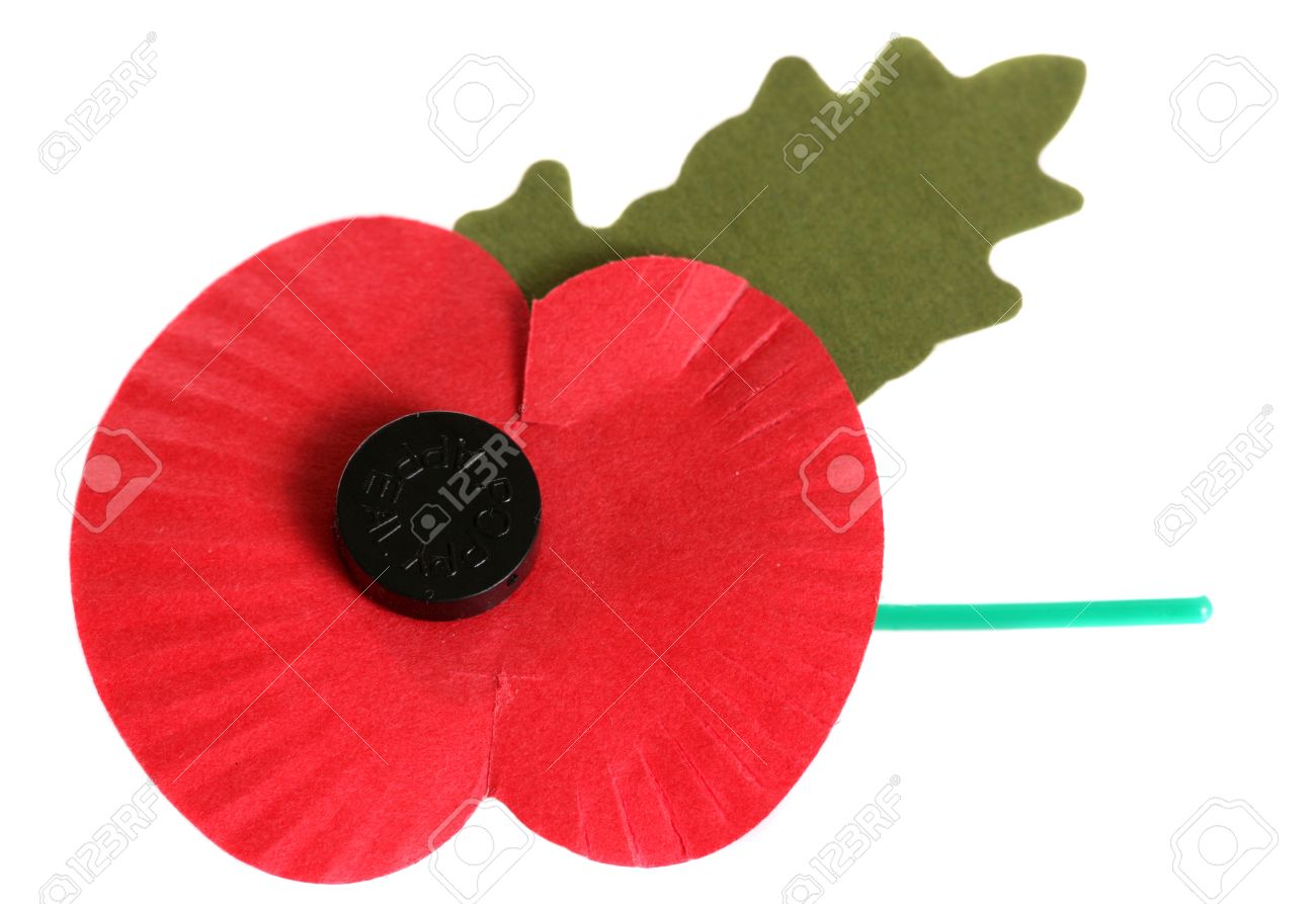 remembrance day poppy on white background stock photo picture and