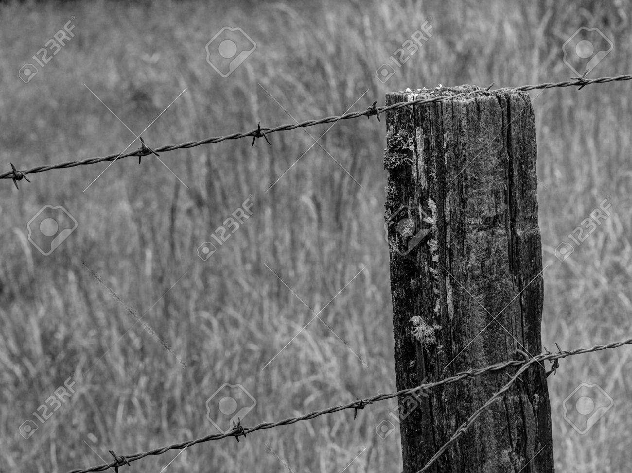 Rustic Barbed Wire Fence In Black And White Stock Photo, Picture And ...
