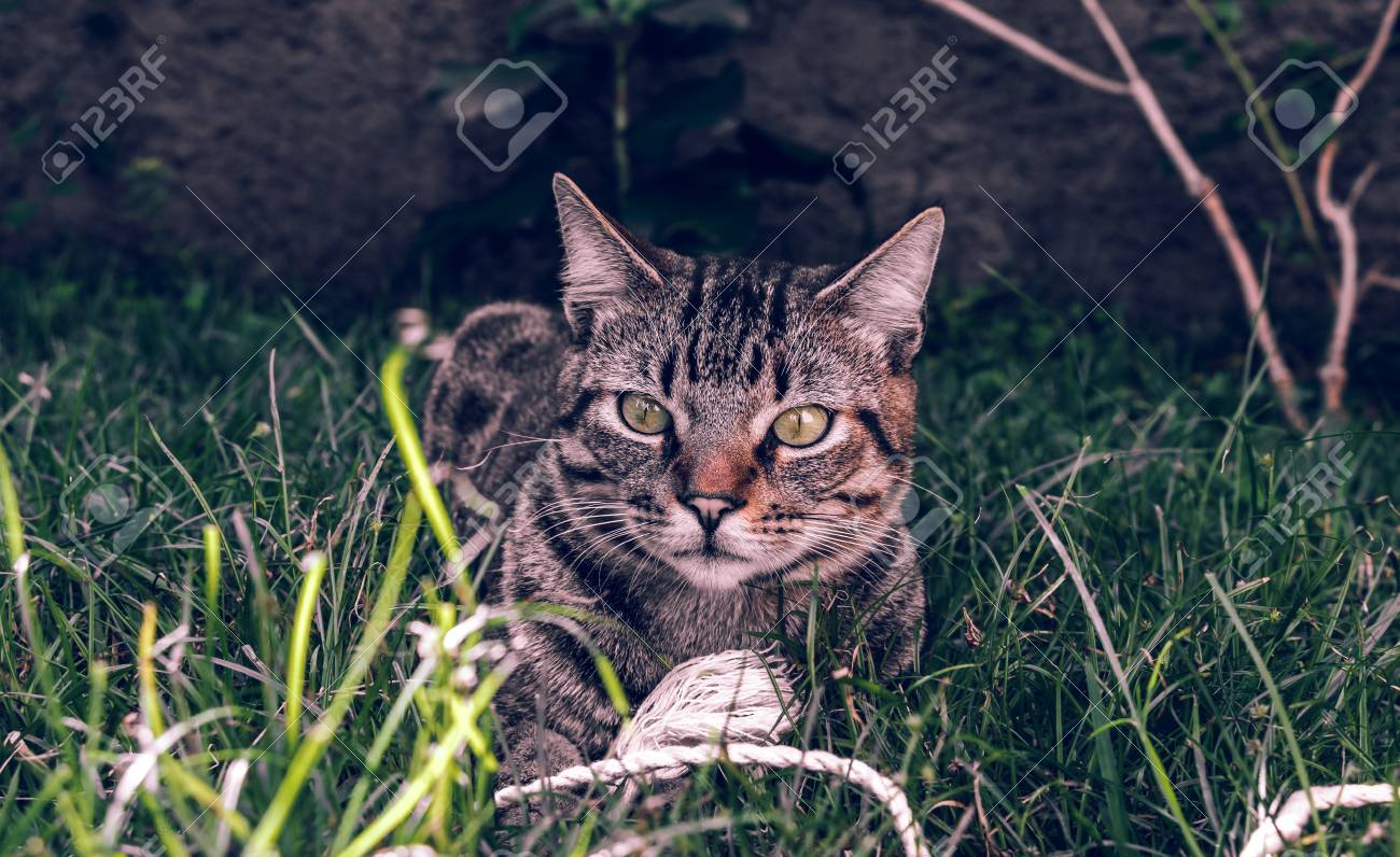 Tabby Cat Holding his toy on the grass - 79443672
