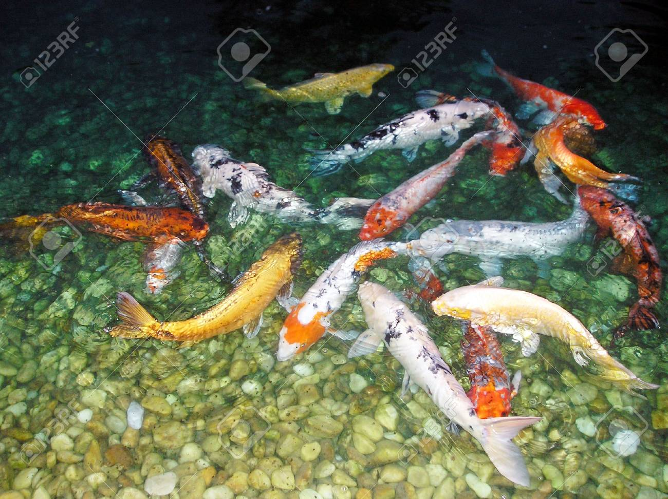 Colorful Fish Stock Photo, Picture And Royalty Free Image. Image 739283.
