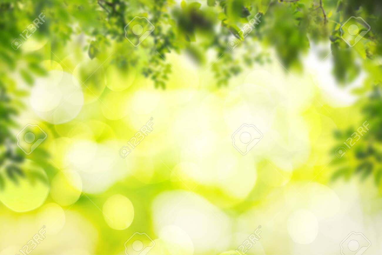 Green leaf on blurred greenery background in garden with copy space using as background natural green plants landscape, ecology, fresh wallpaper concept. - 148651910