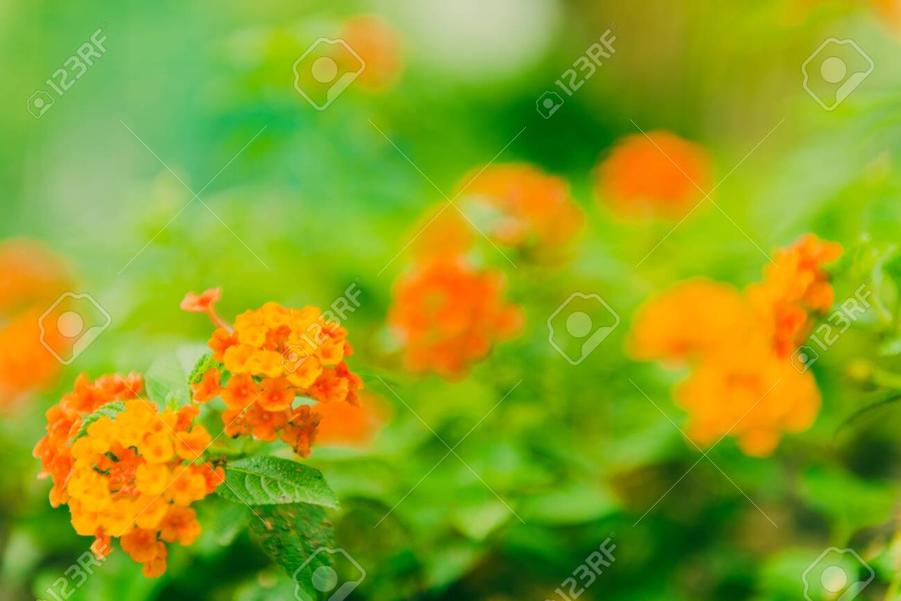 Flower blossom in the green field - 149693766