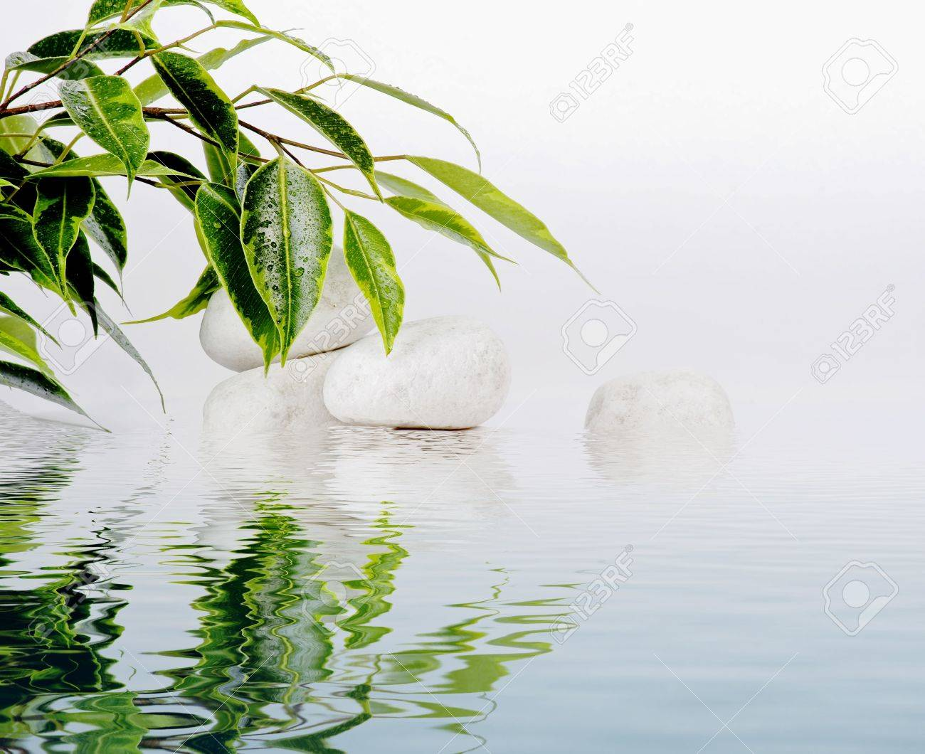 Ficus leaves and white stones in water reflection Stock Photo - 8095121