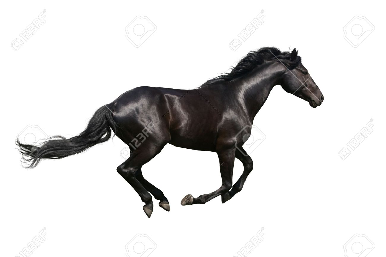 Beautiful Horse Isolated On White Background Stock Photo Picture And Royalty Free Image Image 36972519