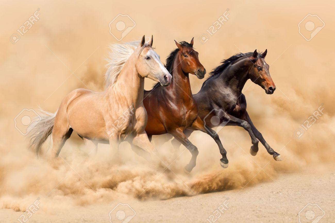 Three horse run in desert sand storm - 44849641