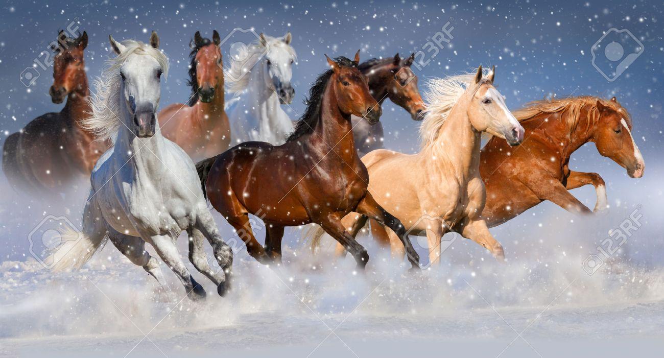 Horse herd run fast in winter snow field - 50581363