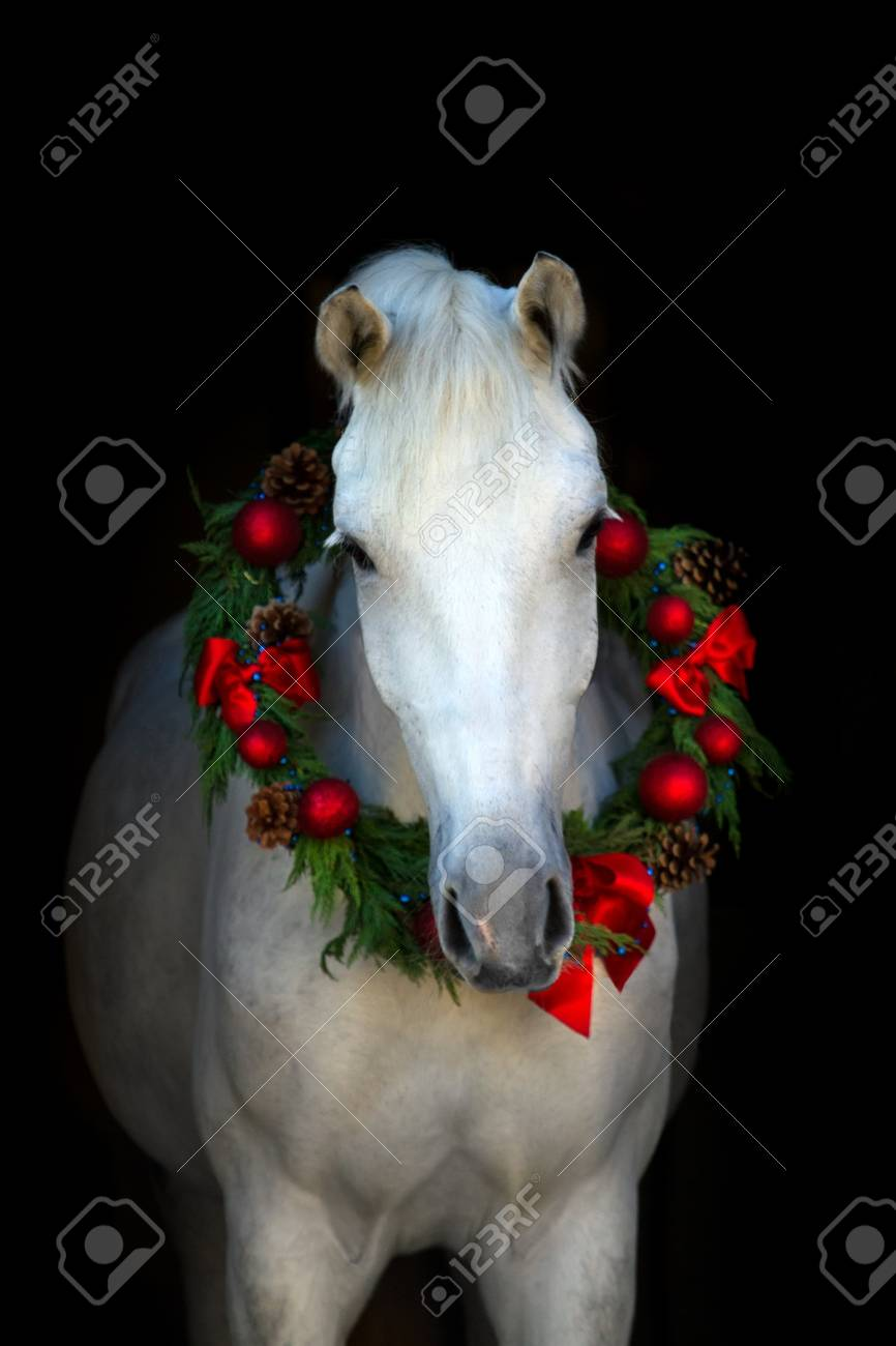 Christmas Image Of A White Horse Wearing A Wreath And A Bow On Stock Photo Picture And Royalty Free Image Image 51168648