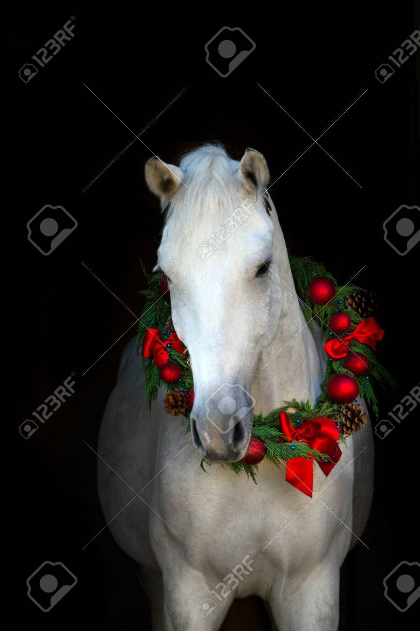 Christmas Image Of A White Horse Wearing A Wreath And A Bow On Stock Photo Picture And Royalty Free Image Image 51168660
