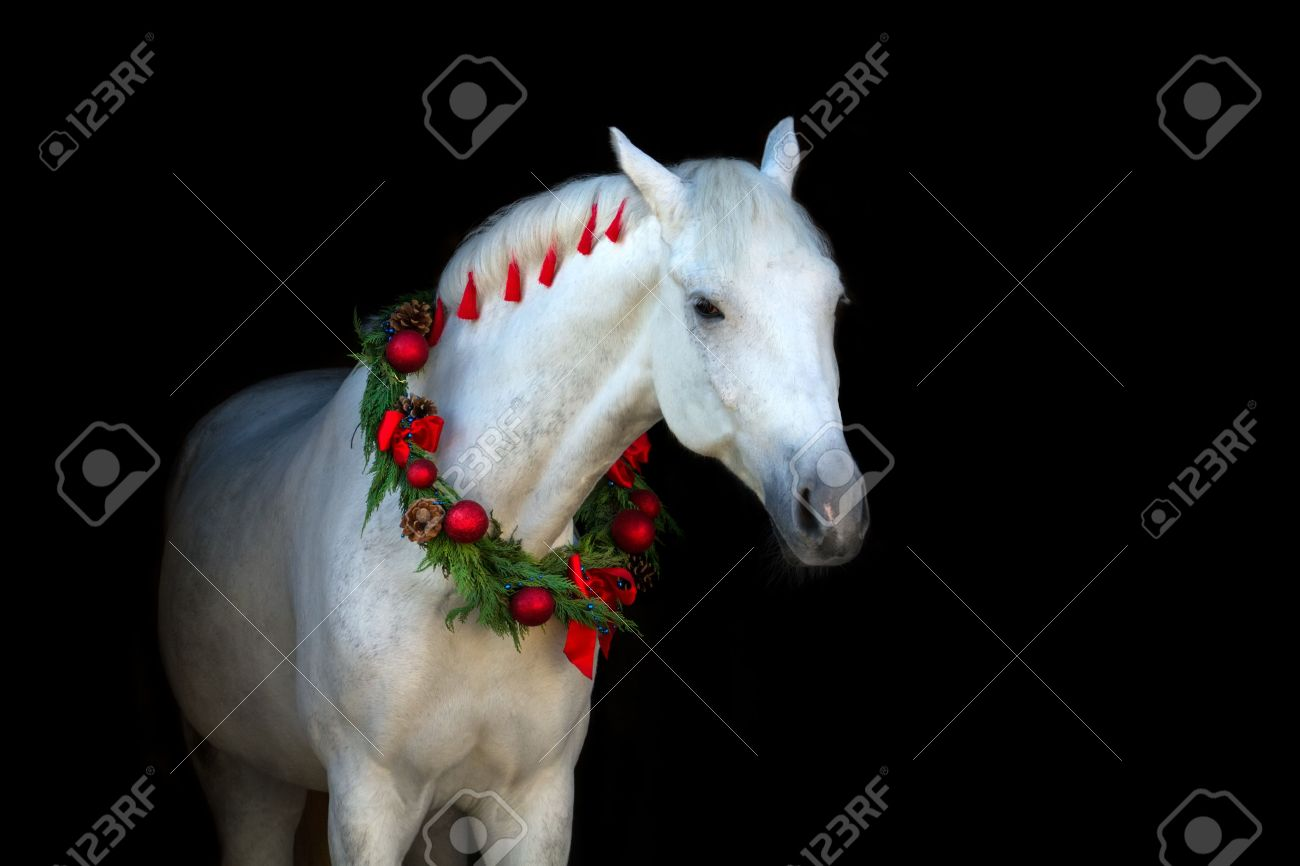 christmas image of a white horse wearing a wreath and a bow on black background stock - Horse Christmas