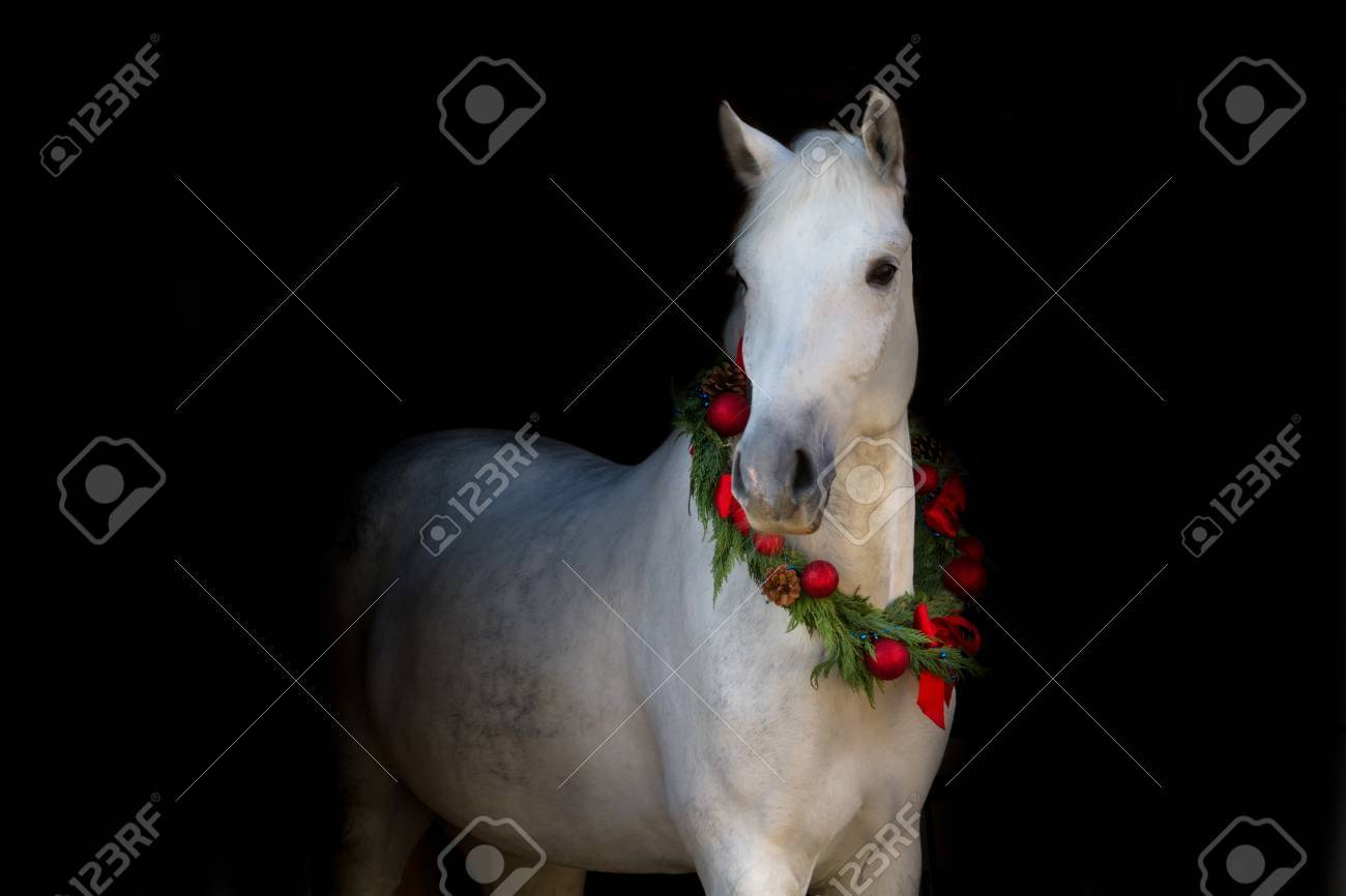 Christmas Image Of A White Horse Wearing A Wreath And A Bow On Stock Photo Picture And Royalty Free Image Image 51168664