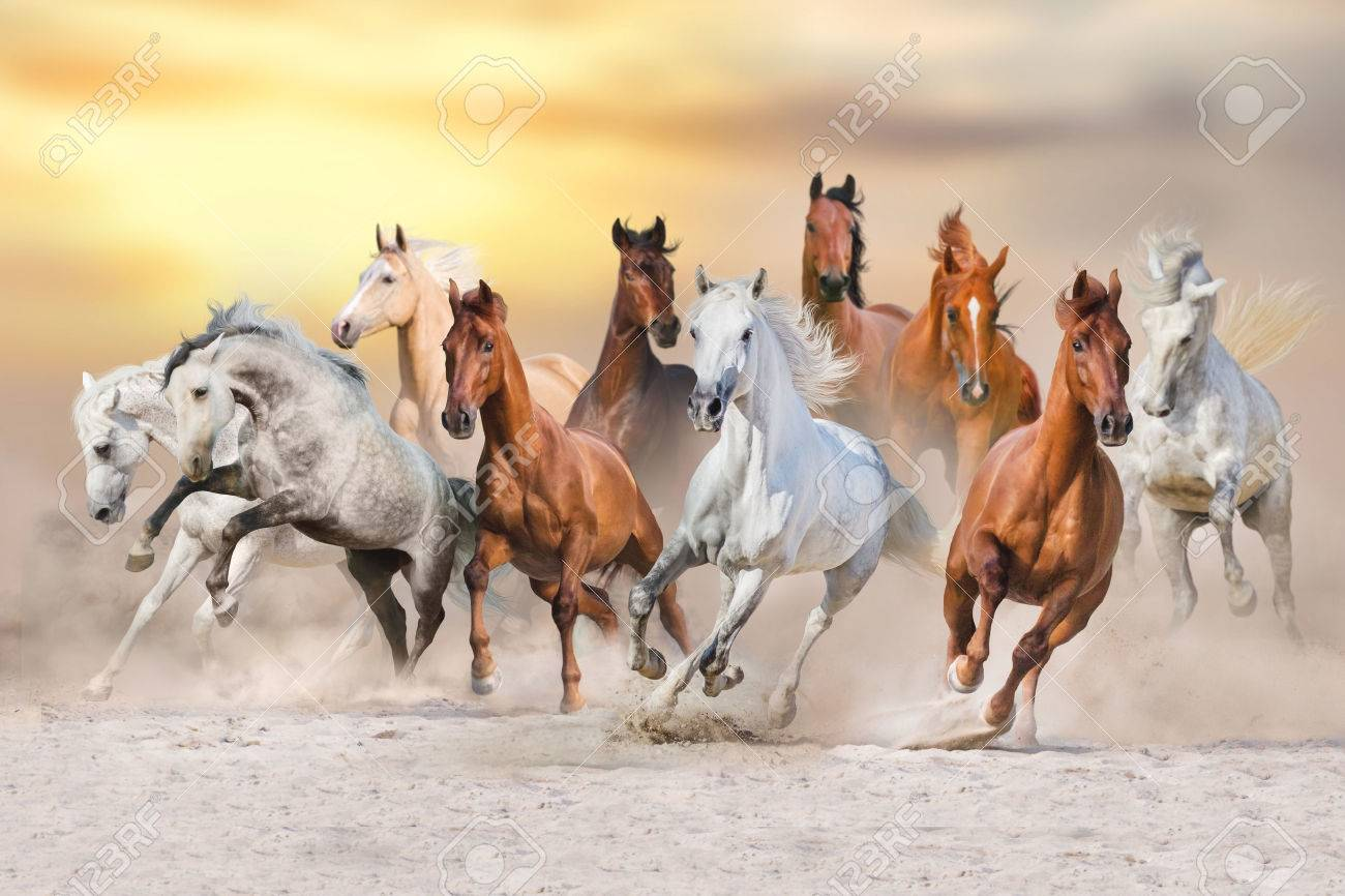 Horses run gallop in dust against sunset sky - 62087491