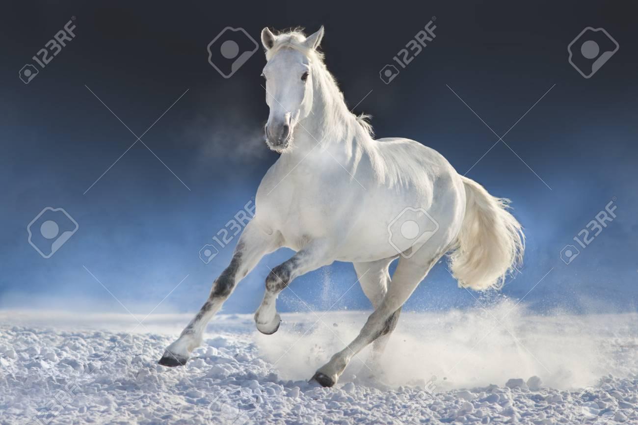White Horse Run In Snow Field Against Dark Background Stock Photo