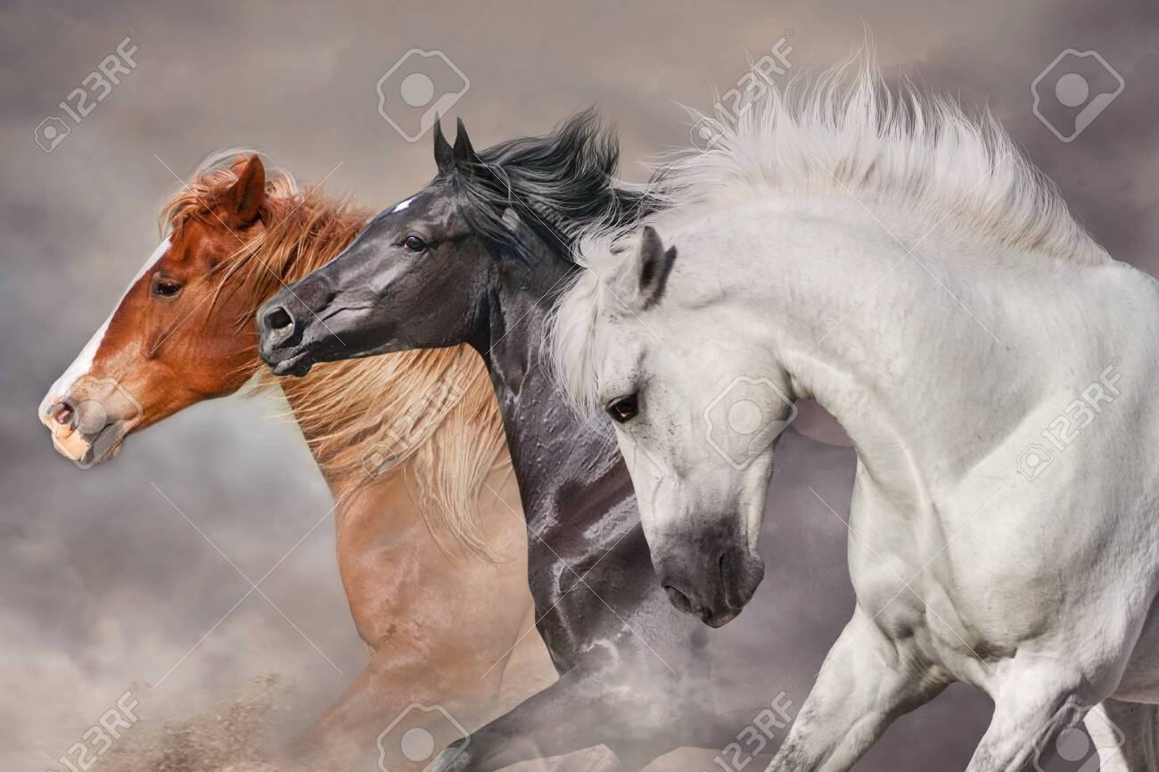 Horses with long mane run gallop in desert dust - 154096813