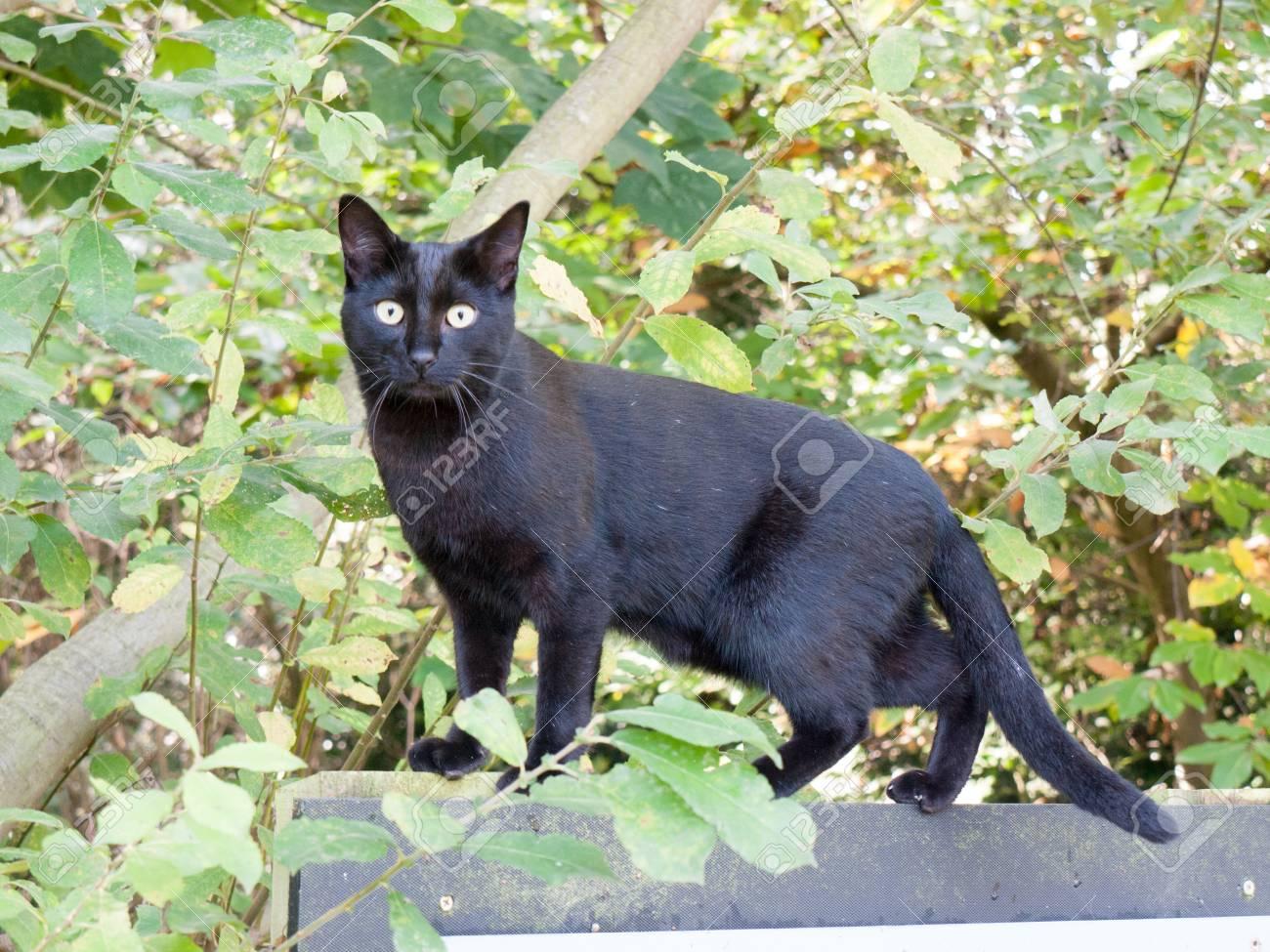 Black Cat Facing Camera Green Eyes Cute Adorable Close Up Essex