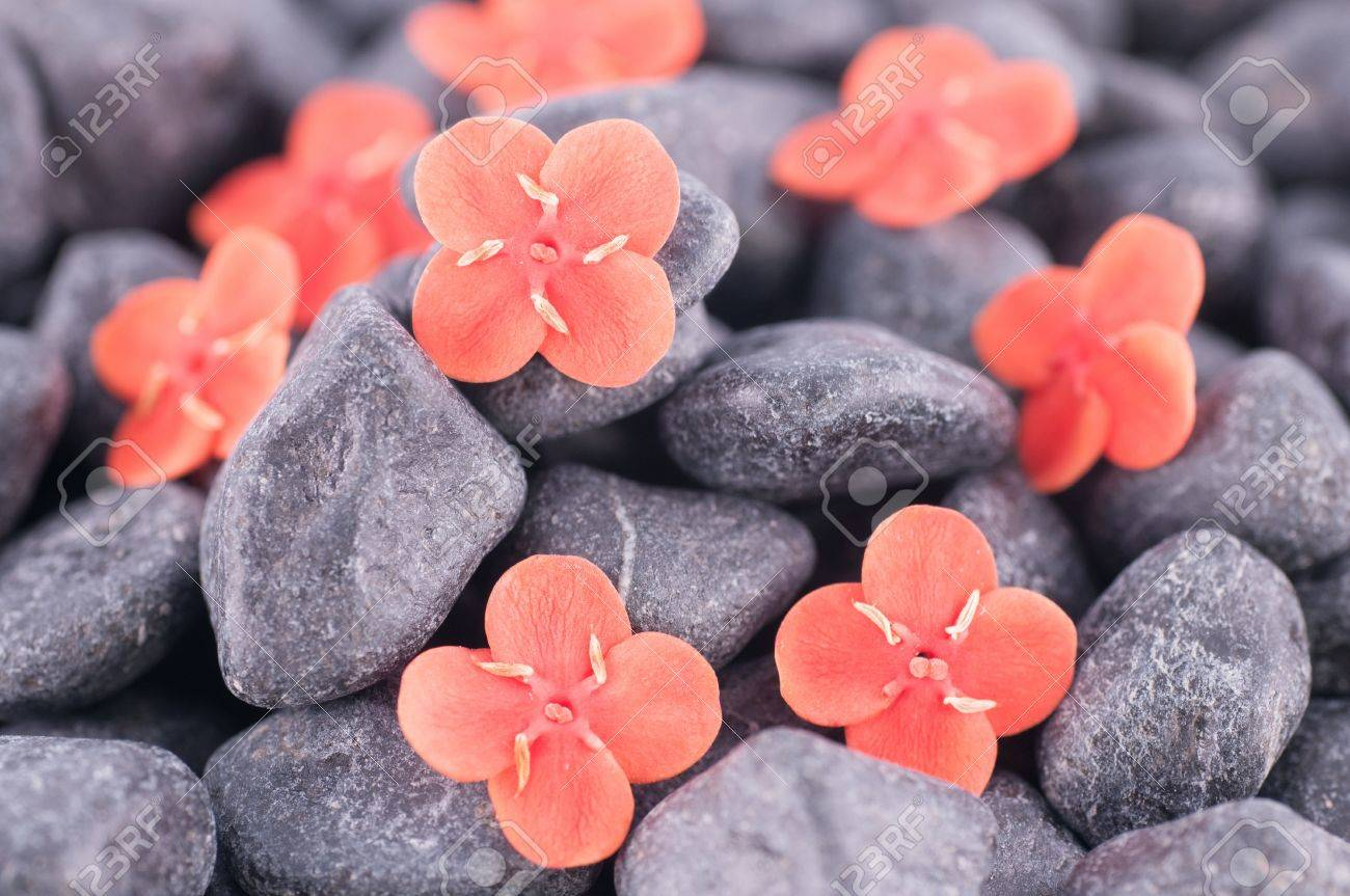 Ixora Prince of Orange flowers on black zen stones close up Stock Photo - 16855028