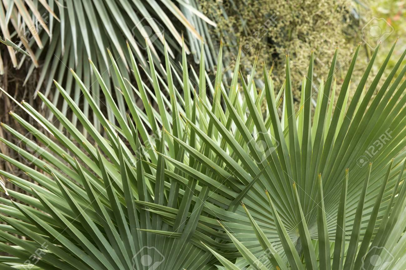 palmier 76