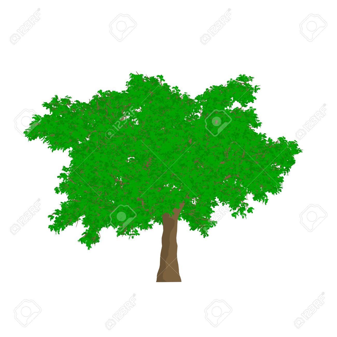 oak tree cartoon shaded isolated in white background stock photo rh 123rf com white oak tree cartoon cartoon oak tree clip art