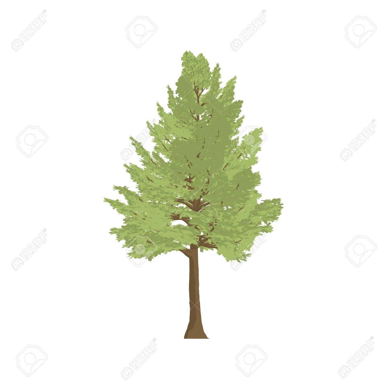Madera De Cedro De Dibujos Animados Sombra De árboles Aislados En