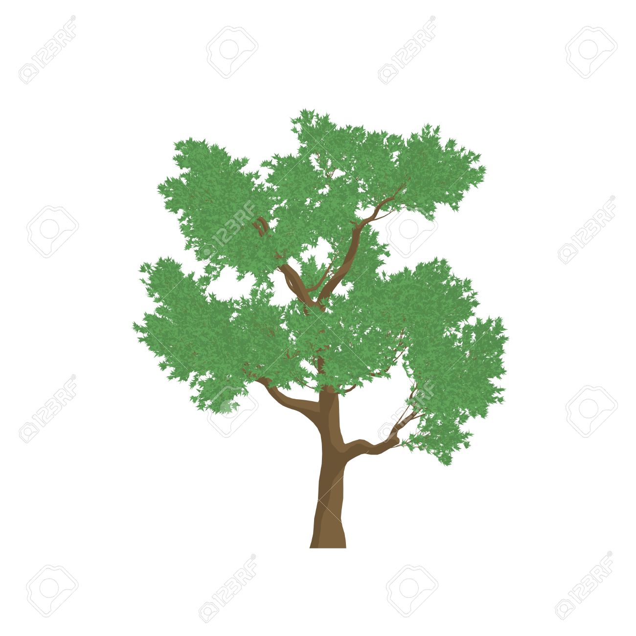 Eucalyptus Tree Cartoon Shaded Isolated In White Background Stock Photo Picture And Royalty Free Image Image 31078423 Find this pin and more on 3d object sketch by deretor. eucalyptus tree cartoon shaded isolated in white background