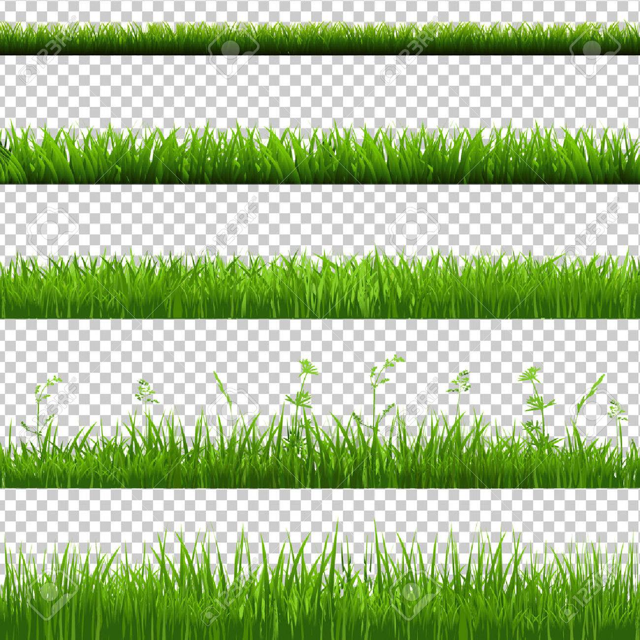 Green Grass Borders Big Set, Isolated on Transparent Background, Vector Illustration - 55086458