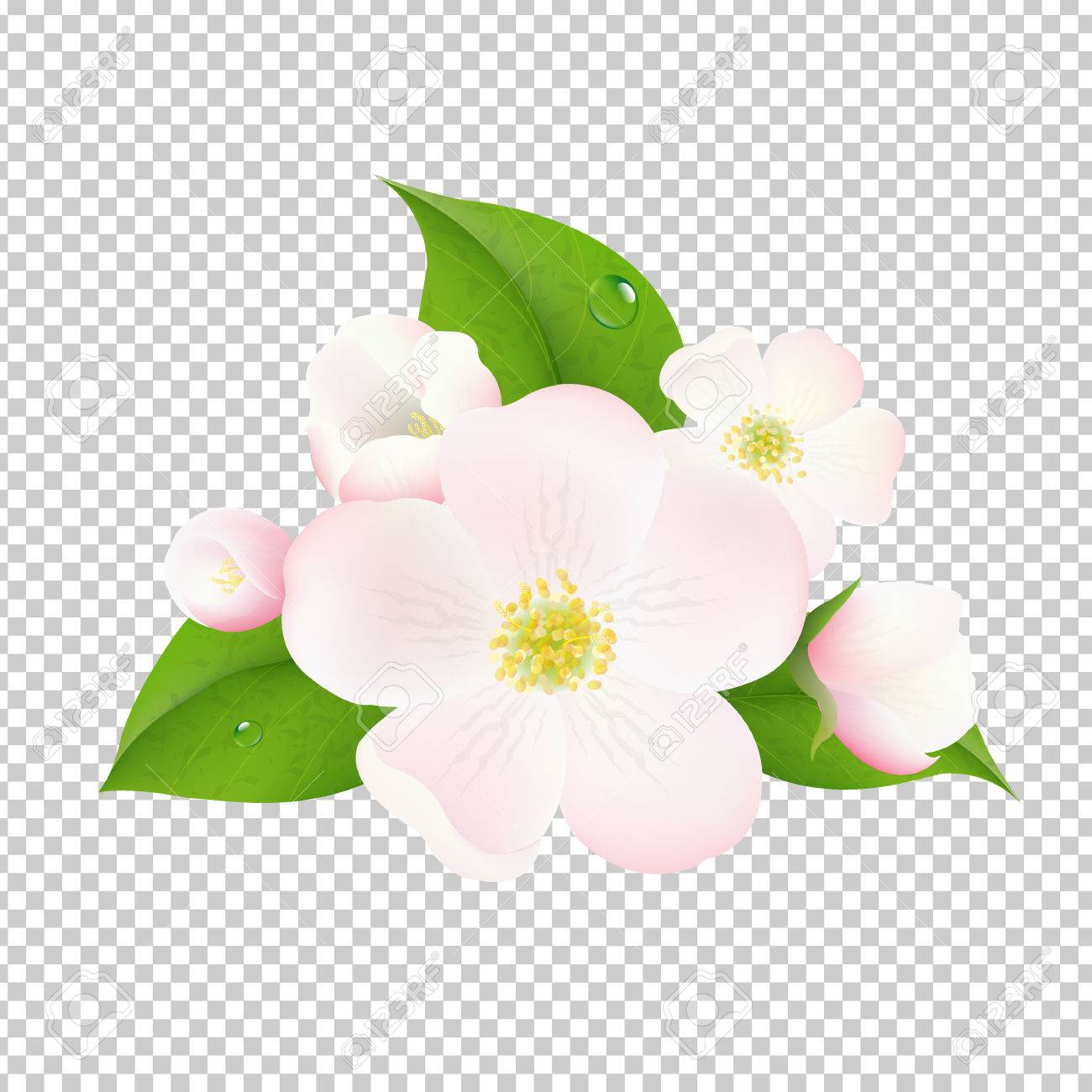 Beautiful Apple Tree Flowers With Transparent Background With