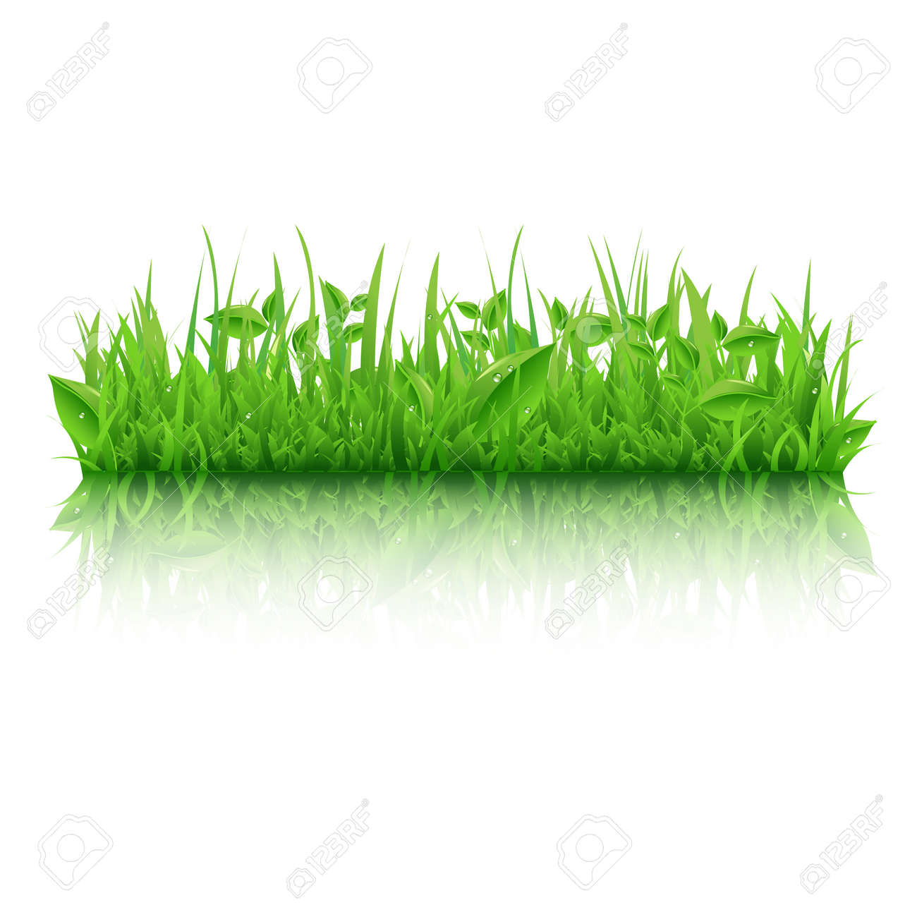 Green Grass With Leafs - 165528073