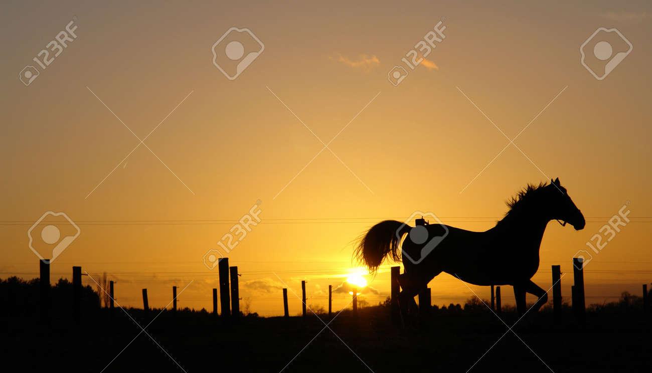 Backlit horse sunset landscape Stock Photo - 710256