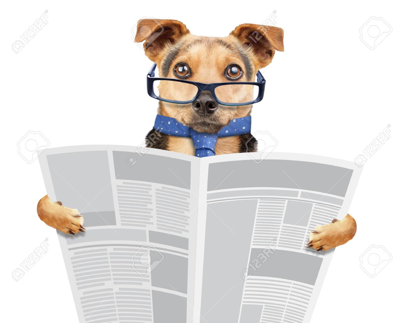 Business Dog Wearing Glasses And Tie Reading Newspaper Isolated.. Stock  Photo, Picture And Royalty Free Image. Image 114255793.