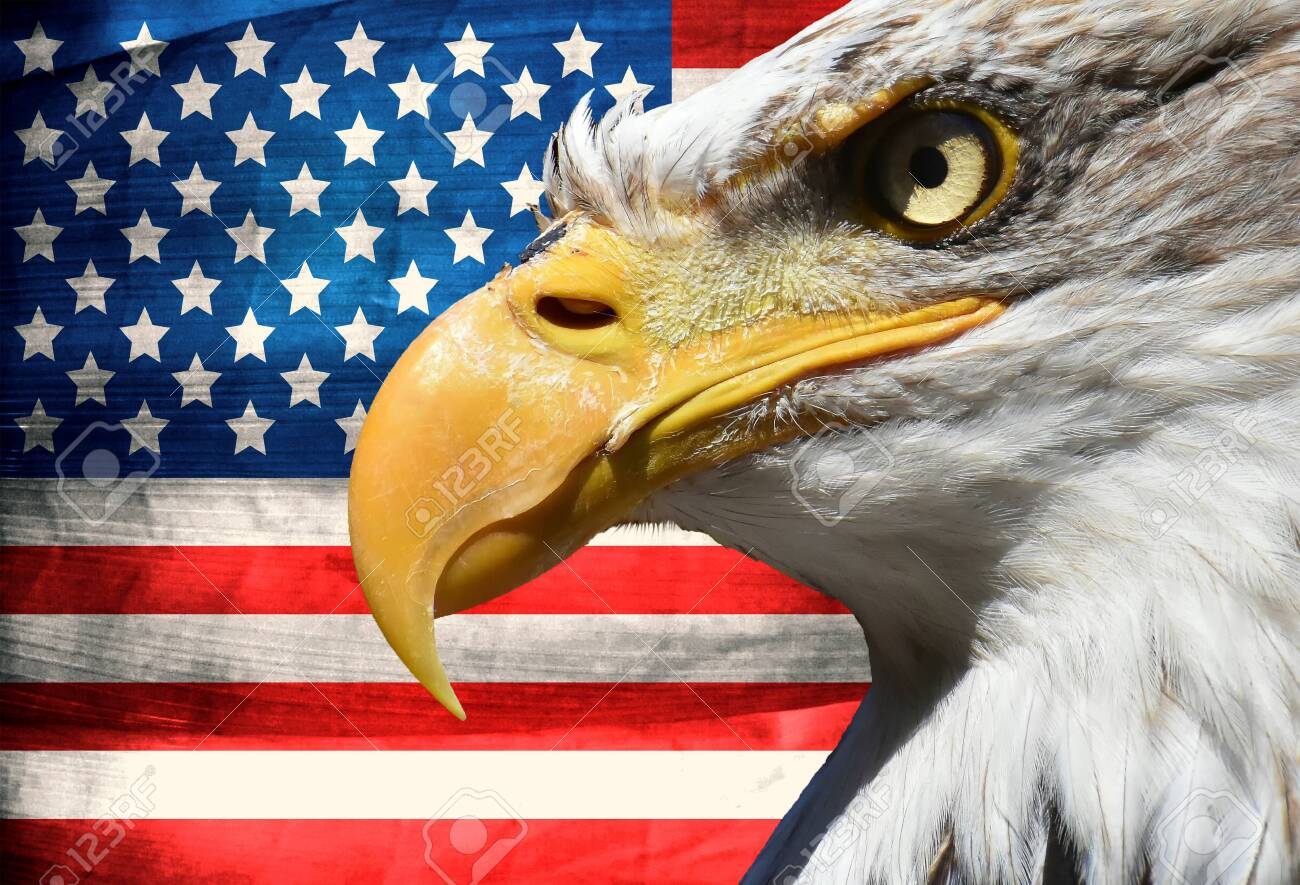 Eagle portrait closeup symbol over usa or us stripes and stars flag - 120089108