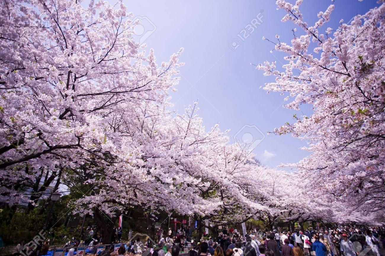 Flower viewing of Ueno-koen Park in Tokyo Stock Photo - 13265752