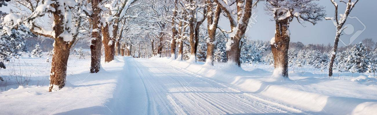 winter panorama on the road through snowy alley - 51434694
