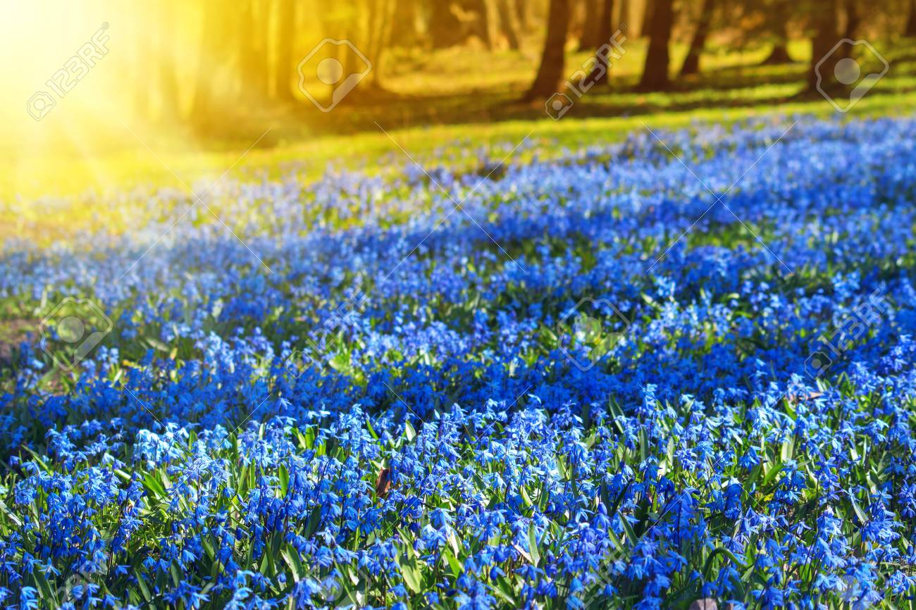 View To Spring Flowers In The Park Beautiful Morning With Sunshine