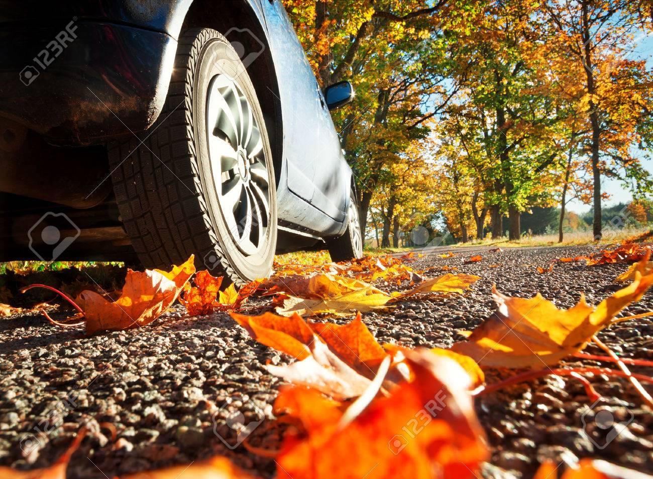 Car on asphalt road on autumnr day at park - 63437089