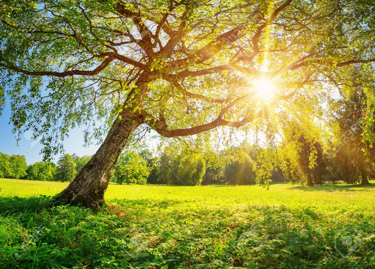 Tree foliage in morning light - 118717725