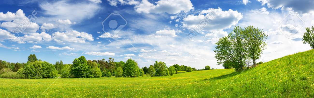 Field with dandelions and blue sky - 118718229