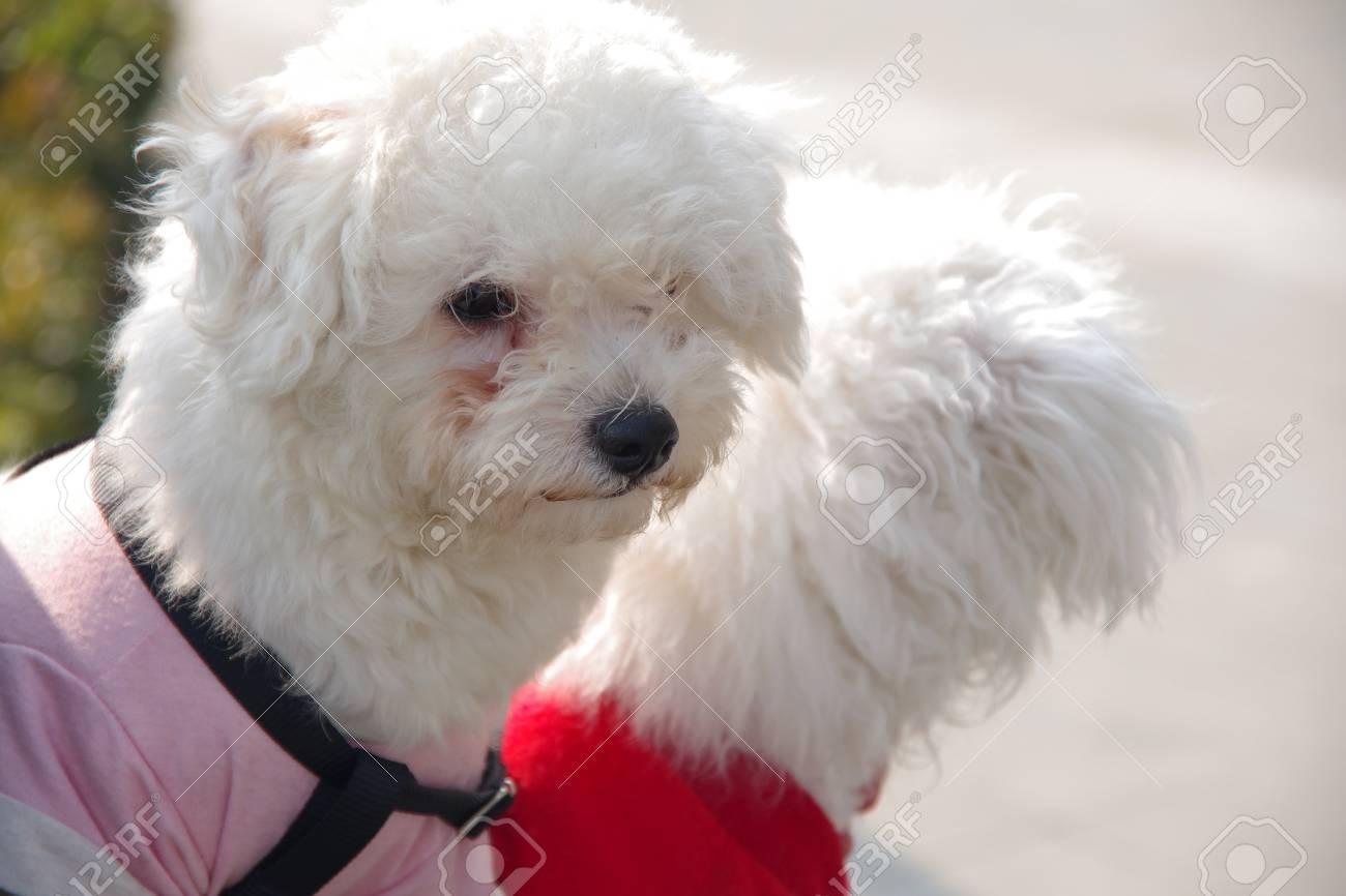pet dogs - 90958013