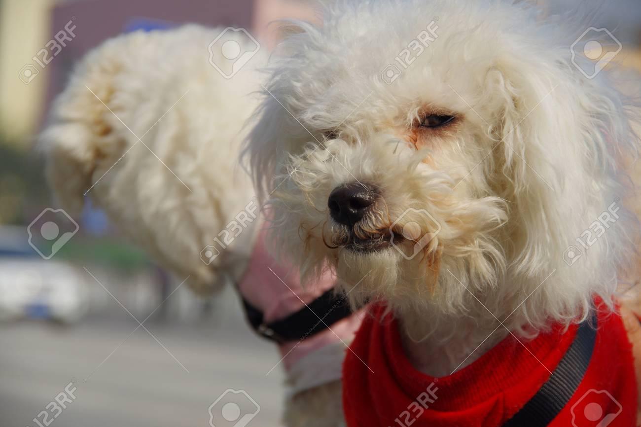 pet dogs - 90958019