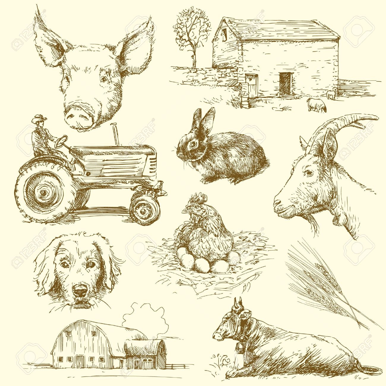 farm animals hand drawn collection royalty free cliparts vectors