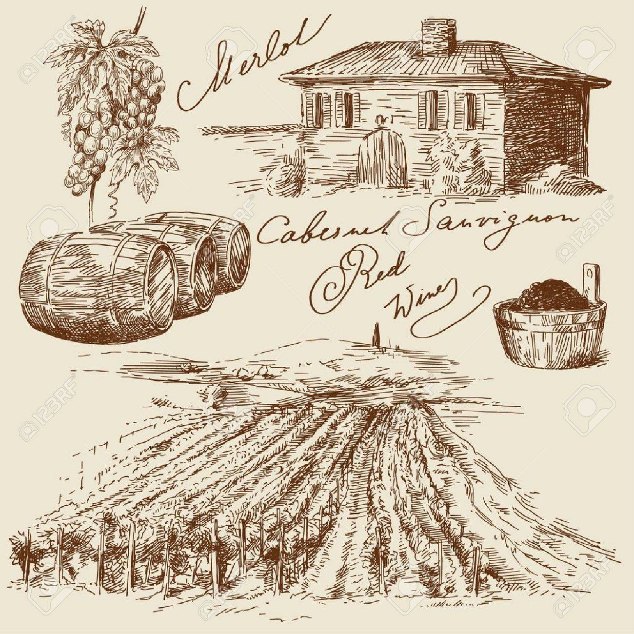 hand drawn vineyards Stock Vector - 14097867
