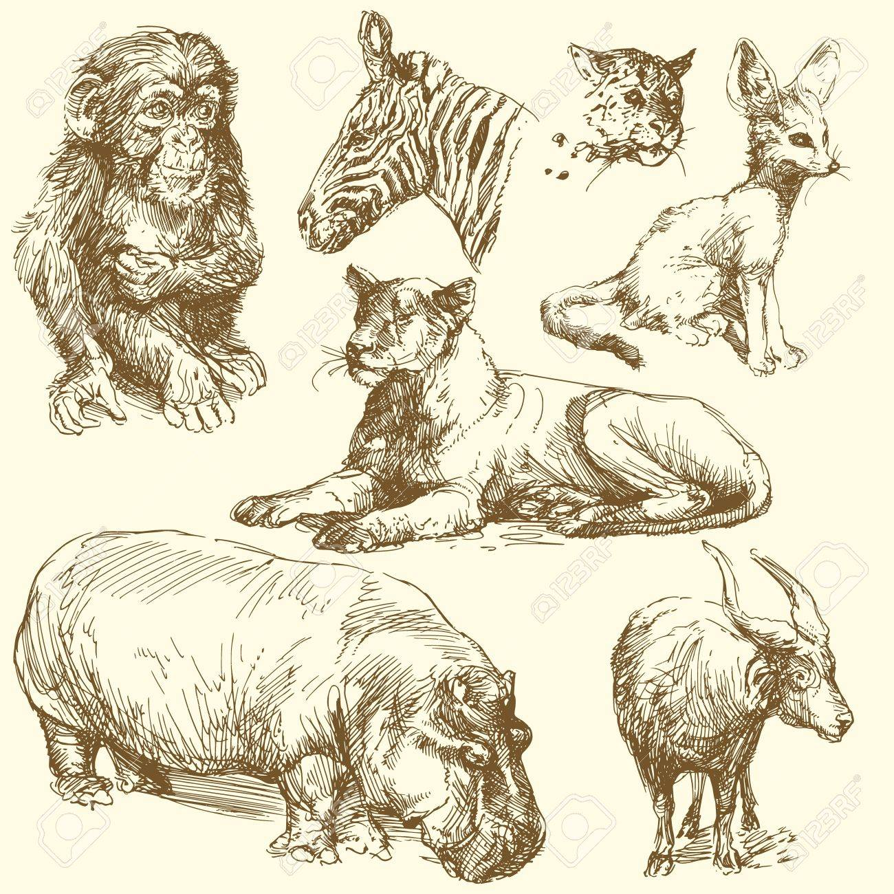 Uncategorized Drawn Pictures Of Animals wild animals hand drawn collection royalty free cliparts stock vector 14625393