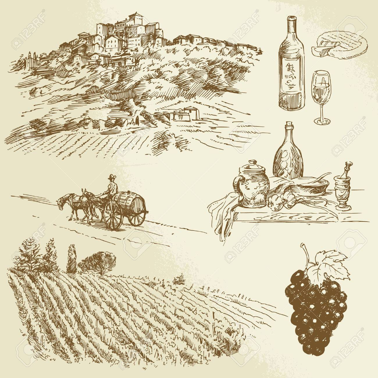italian landscape, vineyard - hand drawn illustration - 23119279