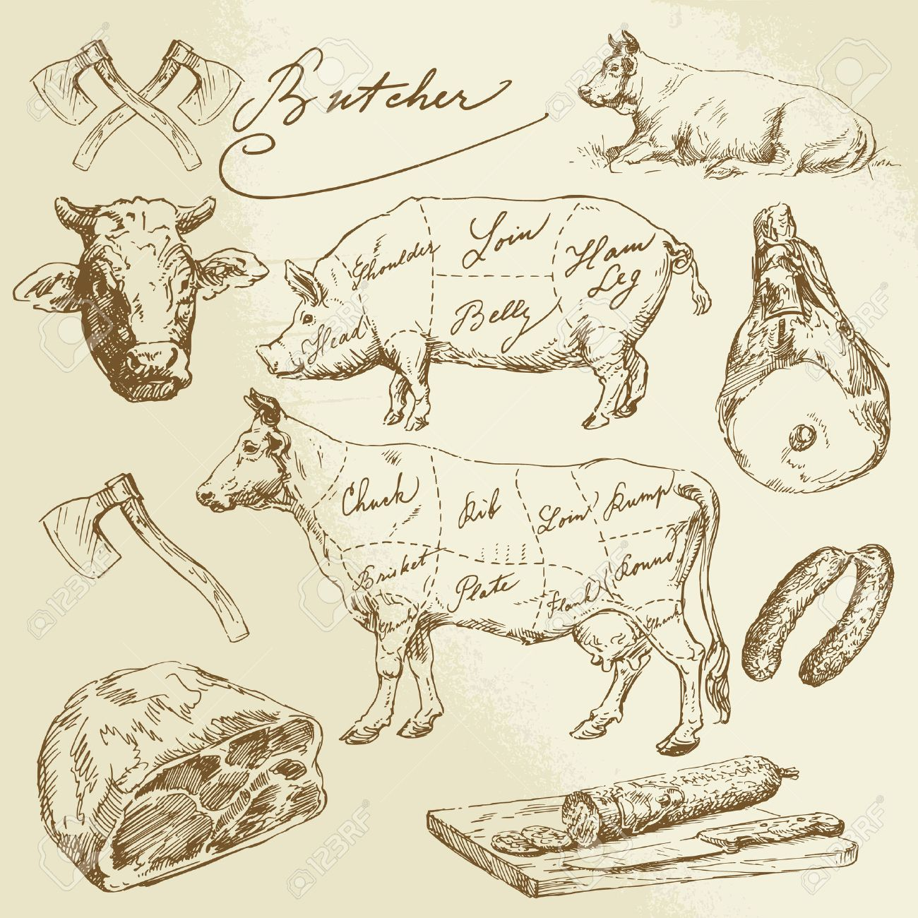pork and beef cuts - hand drawn collection Standard-Bild - 23330264