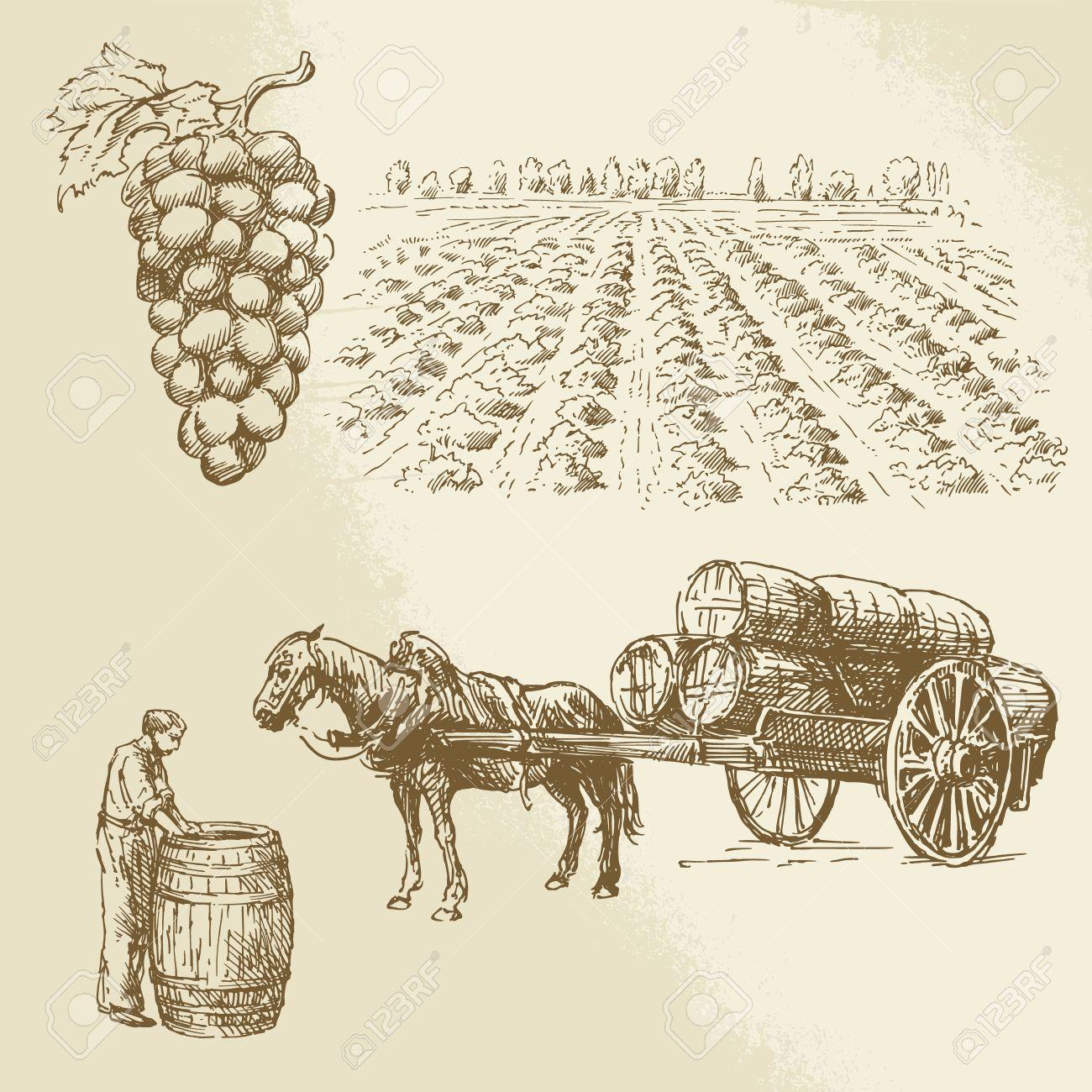 vineyard, harvest, farm - hand drawn collection Standard-Bild - 26590669